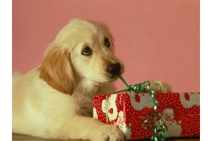 «Стартовый набор» для щенка