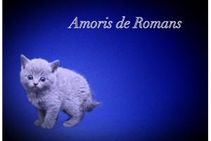 Amoris de Romans