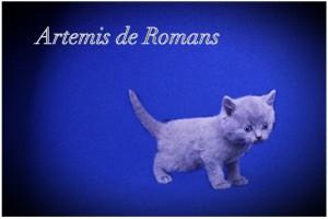 Artemis de Romans