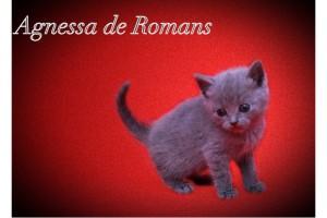 Agnessa de Romans