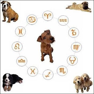 Хочешь узнать, какая ты собака по знаку зодиака?